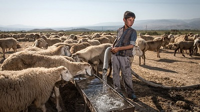 میزان آب تخصیصی برای دامهای روستایی سرخس کافی نیست/ چاههای غیرمجاز سرخس چاههای قدیمی کشاورزی است