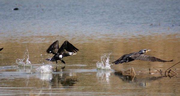 دریاچه بزنگان سرخس جانی دوباره گرفت