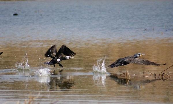 شهرستان سرخس، زیستگاهی خاص برای پرندگان مهاجر در زمستان است/ پرندهنگری، فرصتی برای رشد گردشگری