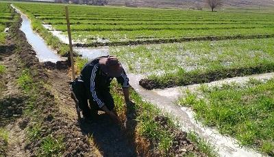 لالوی: ۸۰ درصد کشاورزی سرخس همچنان سنتی است/ تعیین حقآبه کشاورزان سرخسی از سددوستی اصلاح شود